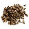 Рецепты из пчелиного подмора при гипертонии