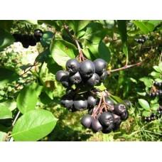 Арония черноплодная (ягода), 100г