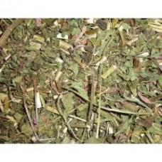 Эхинацея, трава
