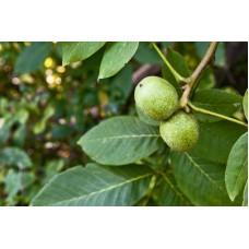 Грецкий орех (лист), 100г