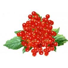 Калина, ягода 50г