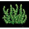 Пол-пала трава при подагре