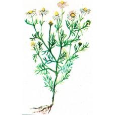 Ромашка (трава), 100г