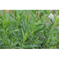 Тархун трава (эстрагон), 50г - купить