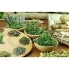 Травы от бесплодия: красная щетка, тмин, отвары трав