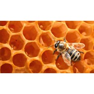 Воск пчелиный, 50г