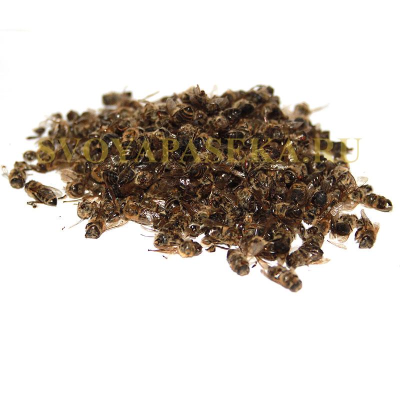 Лечение простатита пчелиным подмором, рецепты