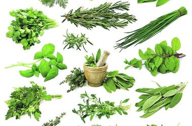 Лечение травами тахикардии